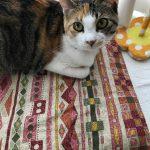 犬や猫などのペットが布団の上でおしっこしてしまった!ときの対処方法
