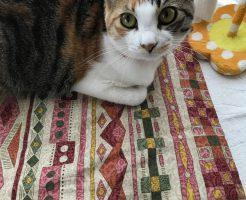 猫が布団の上に座っている画像